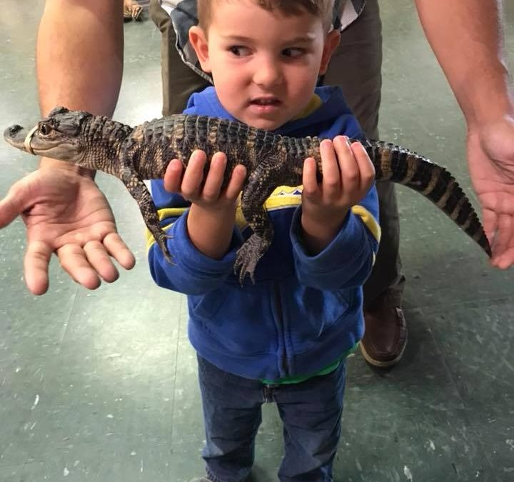 Holding an Alligator at Calusa Nature Center, Fort Myers