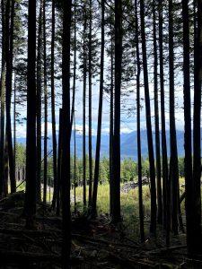 Vedder Mountain Ridge Trail